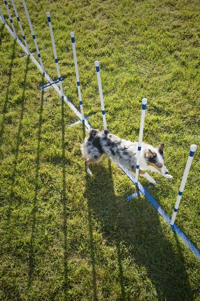 Slow, steady training is key to learning weave poles.