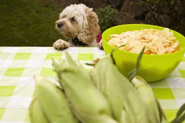 If your dog is allergic to corn, don't feed him hominy.