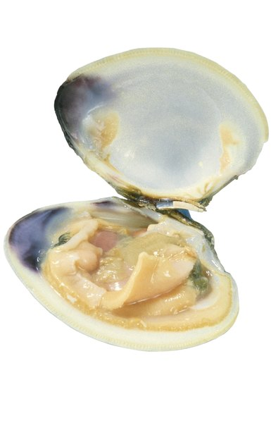 can dogs eat clams