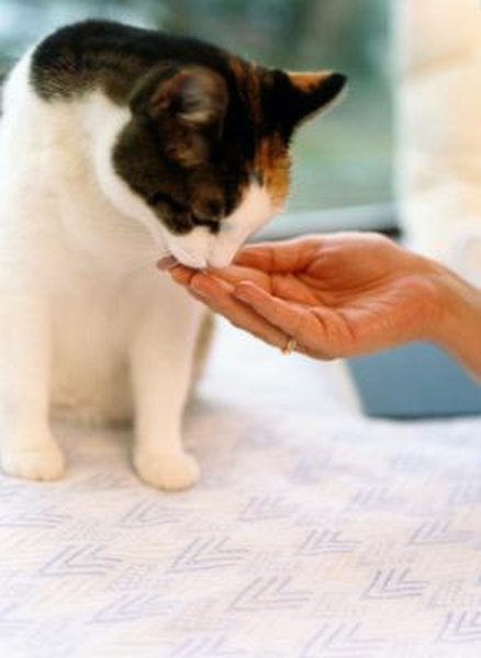 Fenbendazole for Cats - Pets