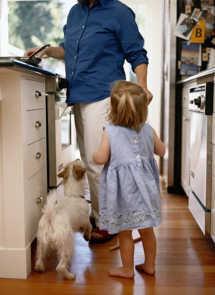 Will Dogs Scratch Laminate Flooring Dog Care Daily Puppy