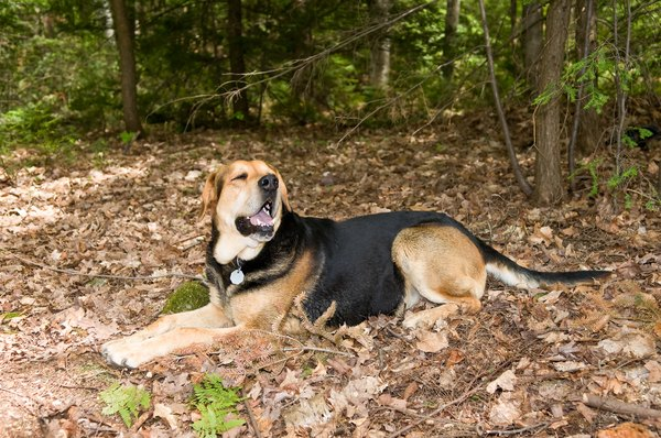 Is Hemlock Bark Bad For Dogs Pets