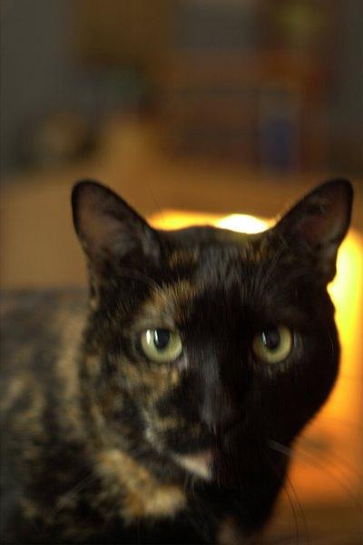Sedating a cat with valium