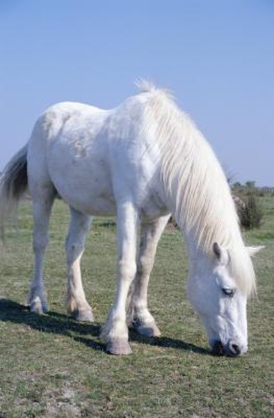 What are the Causes of Bloating in Horses? | Animals - mom me