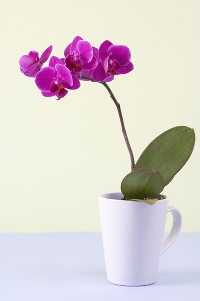 What To Do With An Orchid After The Flowers Fall Off Home Guides