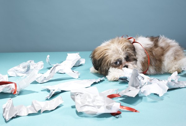 Stressful dogs can act out and destroy items.
