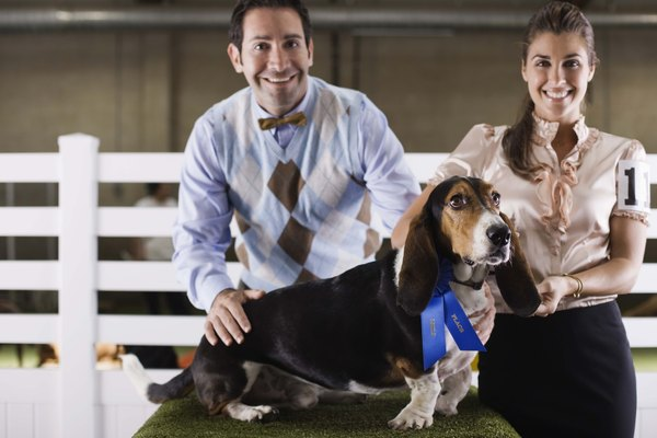 Purebred show dogs are routinely covered by life insurance policies.