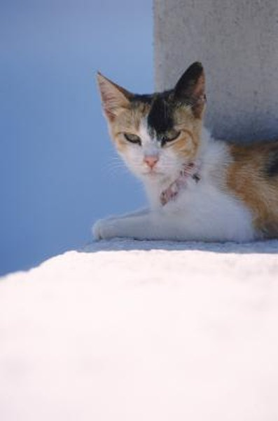 Meds With Therapy Calm Aggression In >> Aggression Medication For Cats Pets