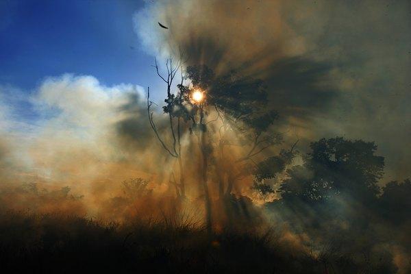 O desmatamento sem precedentes da Amazônia ameaça a sua existência