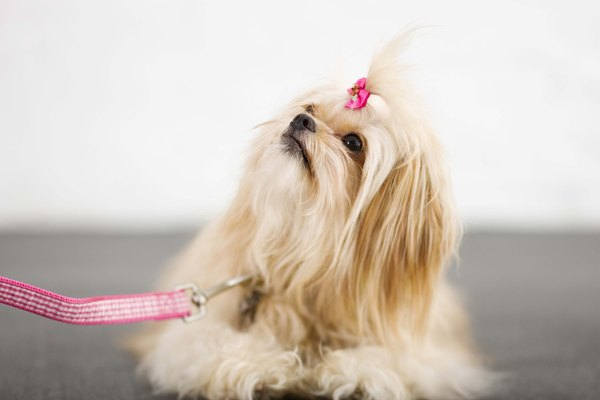 Dead hair can cause your dog to stink.