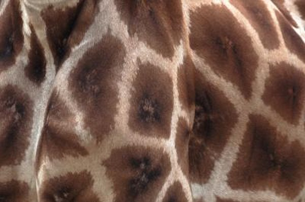 09a49f2be8228 How to Paint Giraffe Spots on a Wall | Home Guides | SF Gate