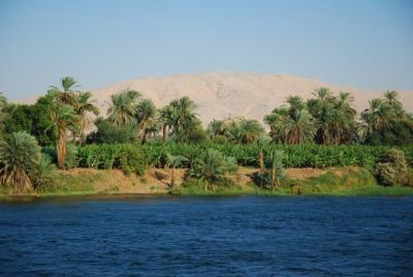 Crops grow along the edge of the Nile River.