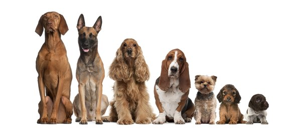 Quarantine infected pups from any other canine family members.
