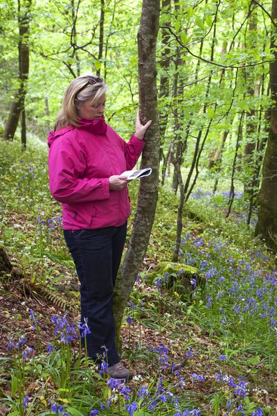 A woman reads a field guide in the woods.