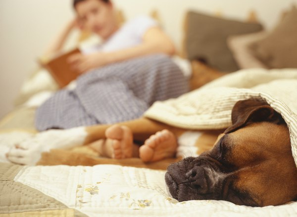 A consistently lazy dog may be suffering from a thyroid deficiency.