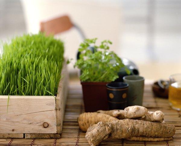 É possível comprar ervas medicinais em herbários públicos ou de universidades, feiras livres, lojas especializadas, sacolões e supermercados