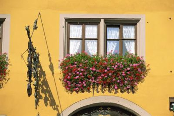 What Kind of Plants to Put in a Window Garden? | Home Guides