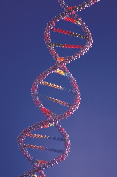 The discovery of the DNA double helix structure is one of the most important breakthroughs in the life sciences.