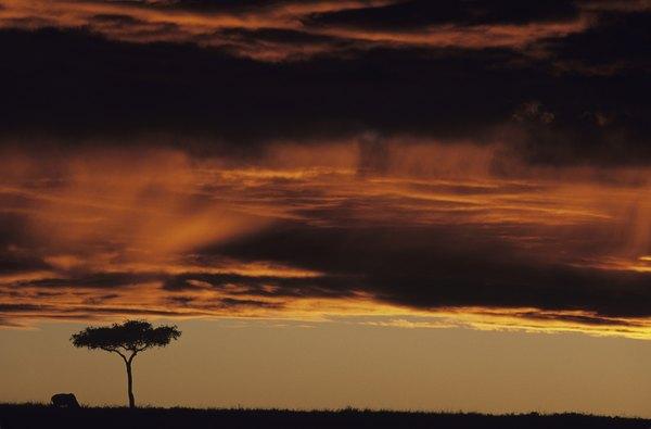 Grassland in Africa.
