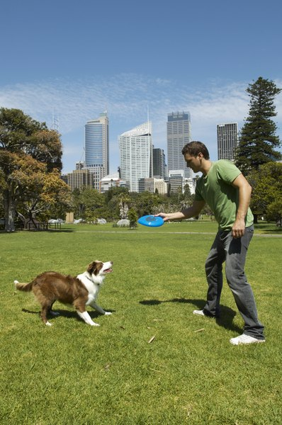 Practice flying disc games with your dog in short but frequent training sessions.