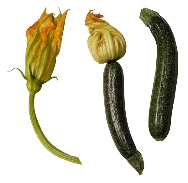 What Do Yellow Flowers On A Zucchini Plant Mean Home Guides Sf Gate