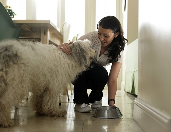 Making a balanced diet at home can be rewarding for both you and your dog.