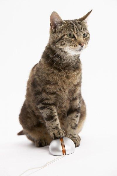 female cat peeing on sofa