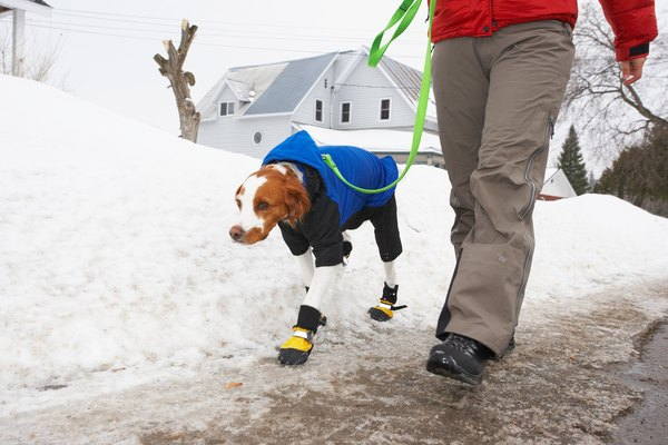 Dog booties prevent painful clumps of snow between the dog's toes.