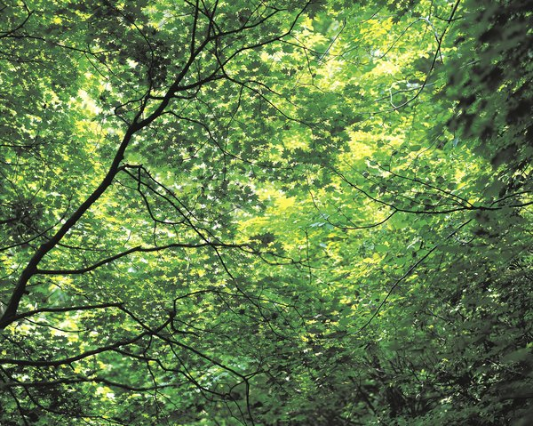 The rainforest canopy.