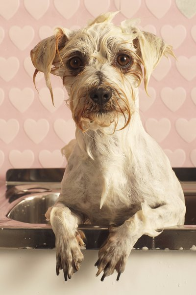 Having a dog shower in your home makes bathing your canine more convenient.