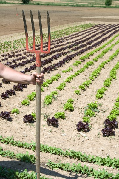 What Organic Fertilizer Should I Use on Vegetables Budgeting Money