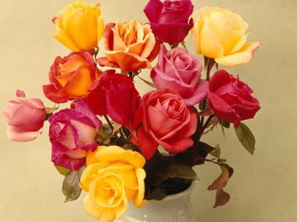 Natural colors of roses home guides sf gate mightylinksfo