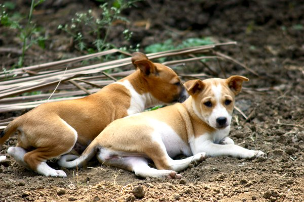 Lice do not spread from dogs to people, but they do spread from dog to dog.