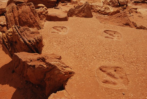 Imprint fossil tracks.