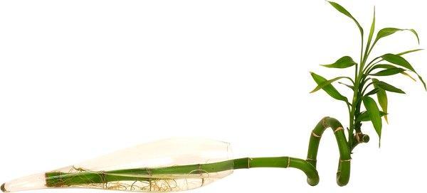 """El """"Bambú"""" es capaz de purificar el aire de una habitación pequeña."""