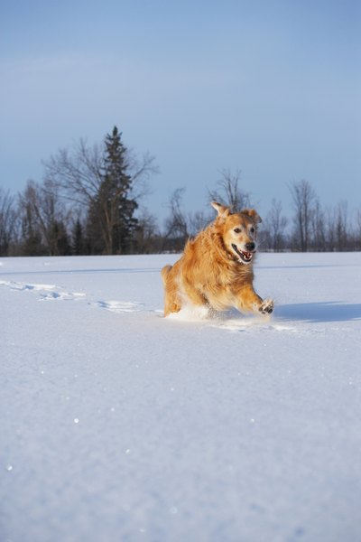 Although dogs love playing in the snow, they also may need help to stay warm.