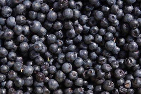 Blueberry Tea Benefits