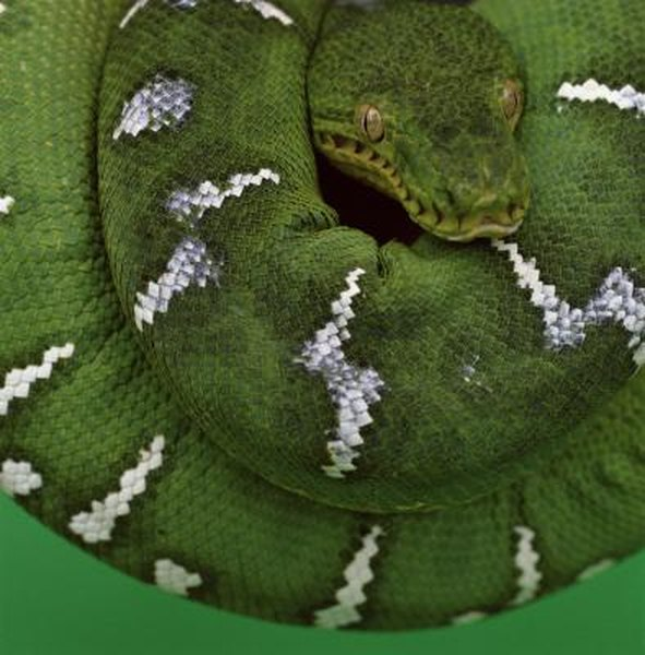 The Best Heating for Snakes | Animals - mom me