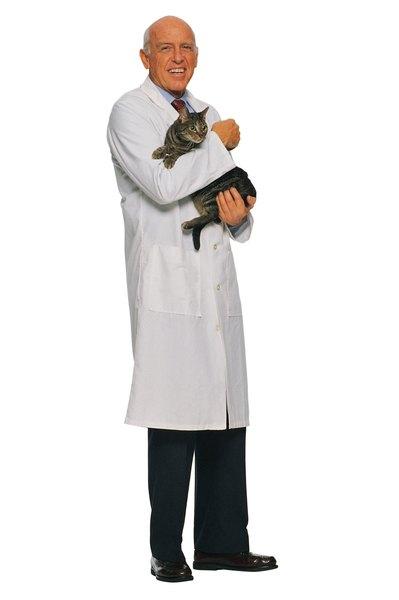neutered male cat spraying indoors