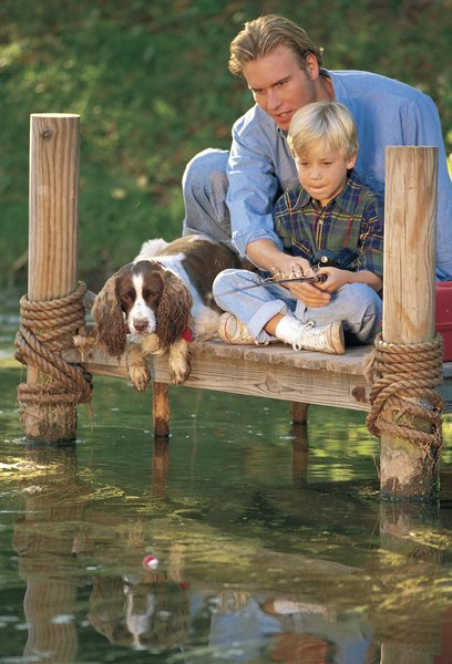 When algae blooms rest on the surface of the pond, keep your dog away from the water.