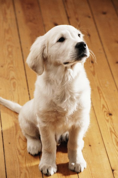 How To Remove Dog Urine Stains From Oak Flooring By Sandra Ketcham An Accident Doesn T Mean Your Floor Is Ruined