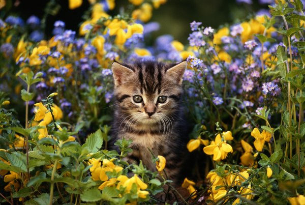 Amazing Though Adorable, That Little Kitty Could Damage Your Plants.