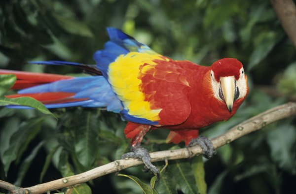 Birds, such as the macaw, are known for their bright color.