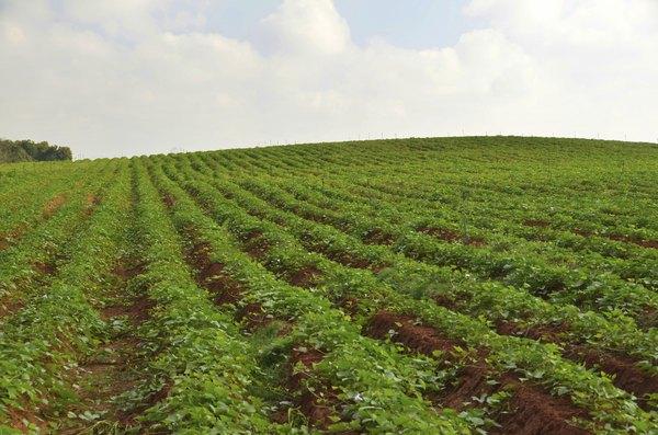 Faça um curso de jardinagem orgânica no Kibbtuz Lotan