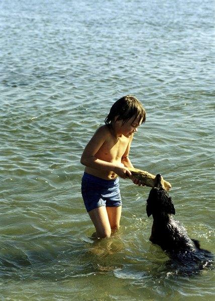 El schnauzer es la mejor raza de perro pequeño para convivir con niños.