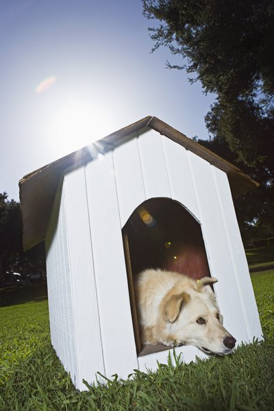 Doghouses offer an escape from the blistering sun, but they're not permanent homes.