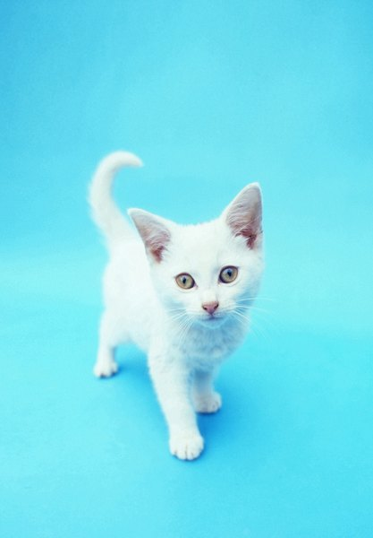 Baby Car Shade >> Cute Names for White Kittens - Pets