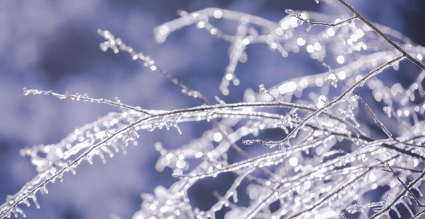 How To Decorate Tree Branches For A Winter Wonderland Themed Party