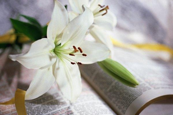 Una flor que significa espiritualidad.