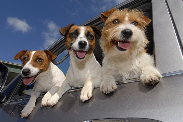 Check your pet's carrier and make sure it's in good shape before your trip.